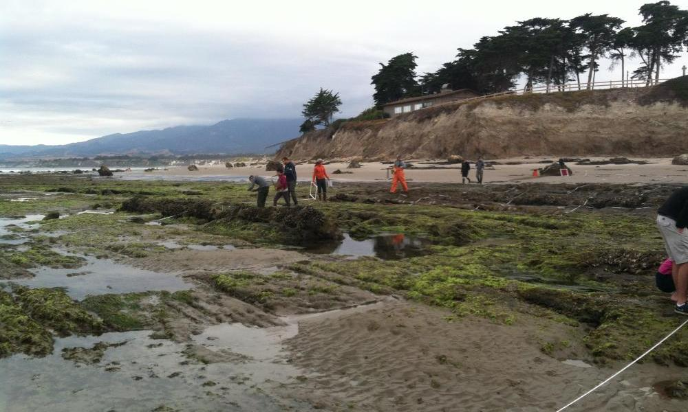 Intertidal monitoring