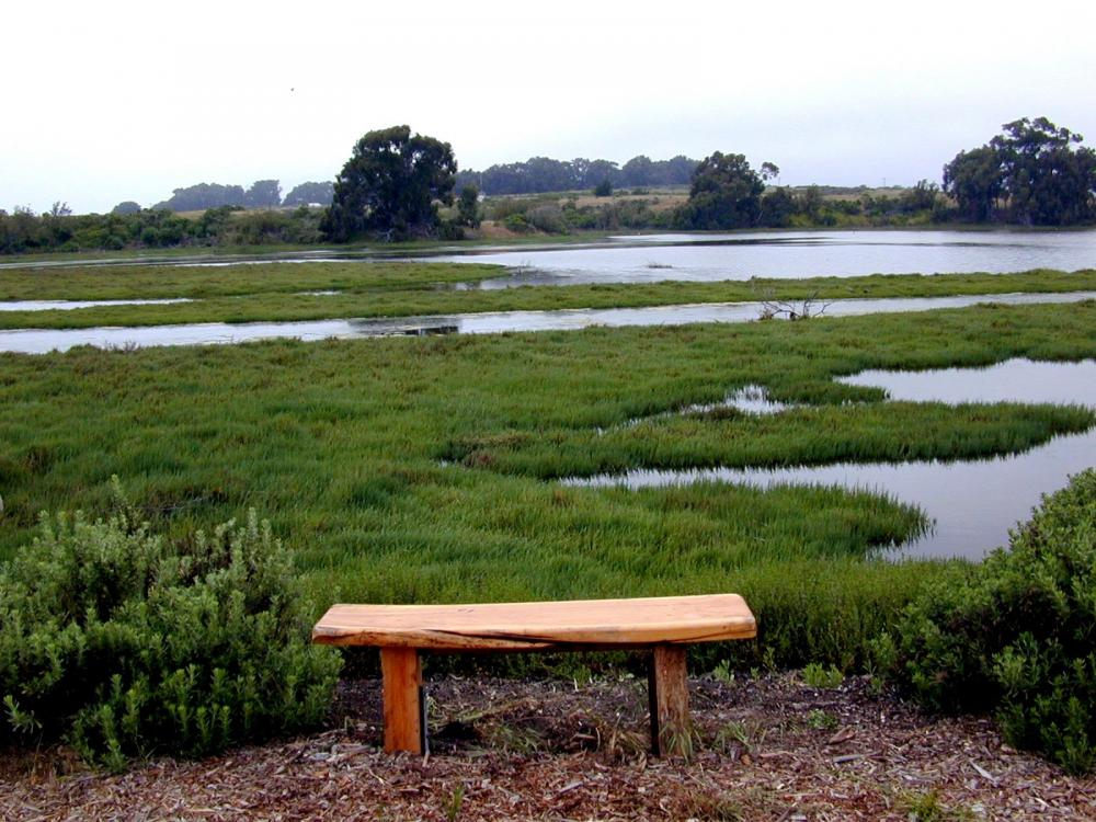 Bench overlooking a pond