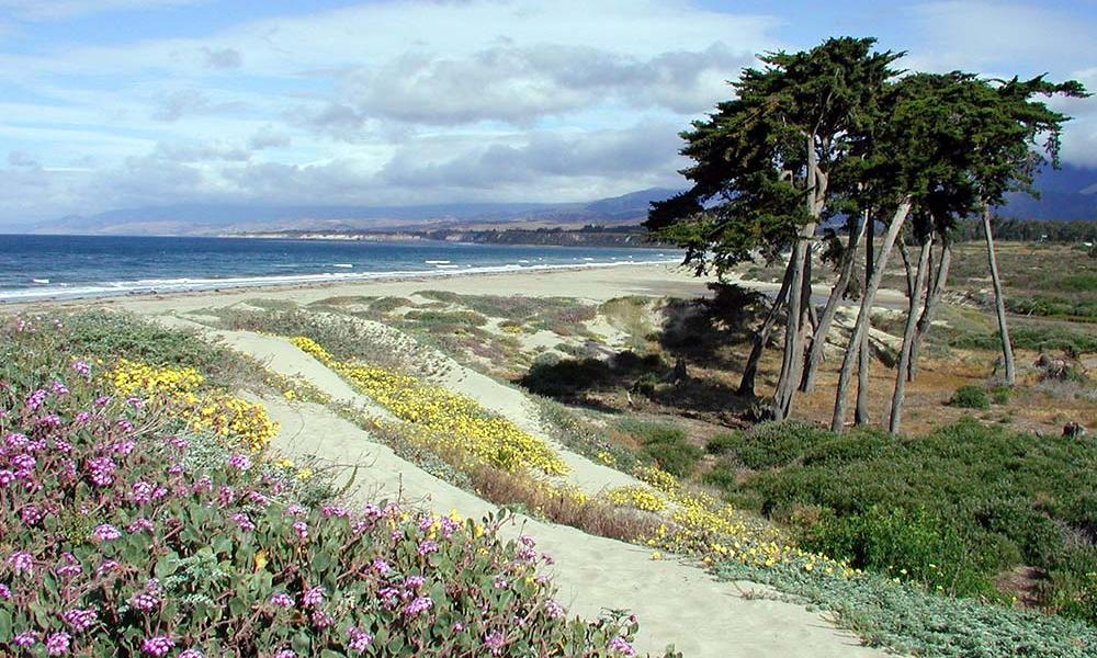 Dune view with flowers in foreground and tall trees